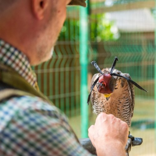 Falconry at Mount Falcon
