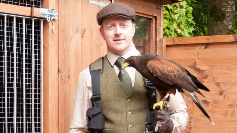 Falconry in West of Ireland